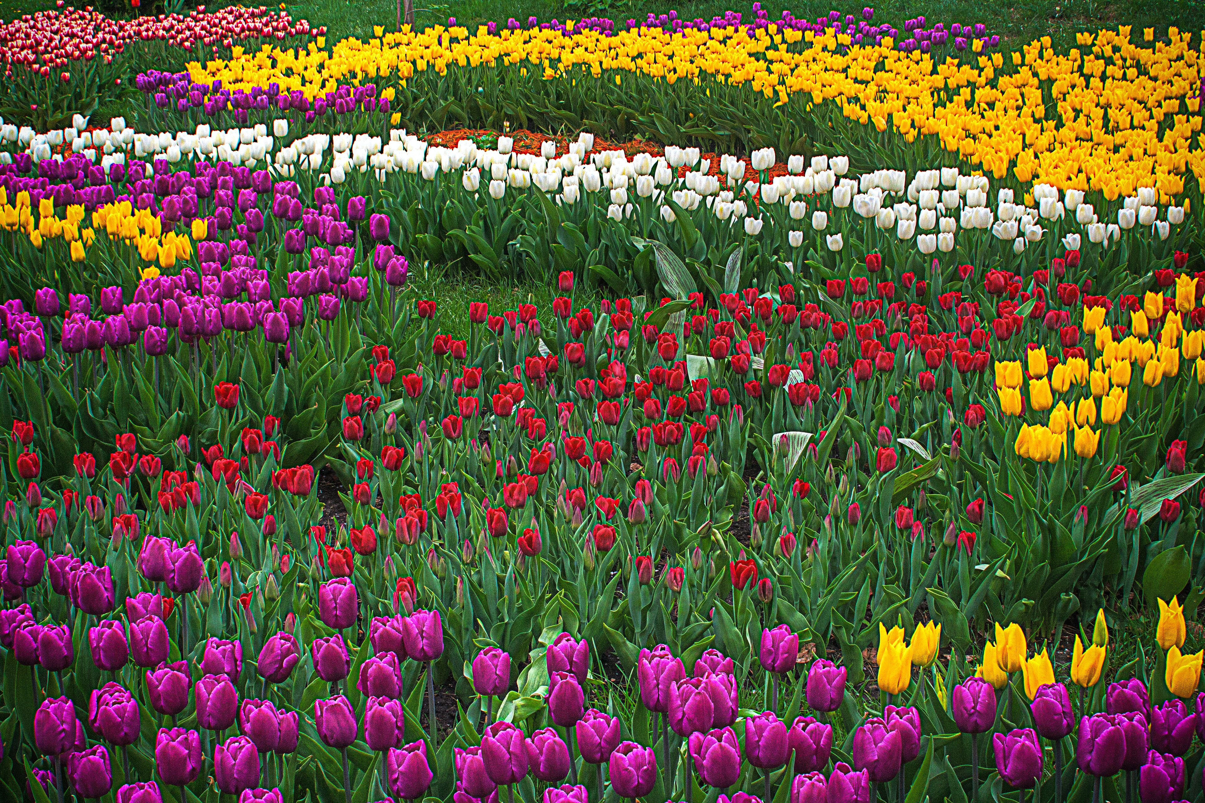 multicolored flower field