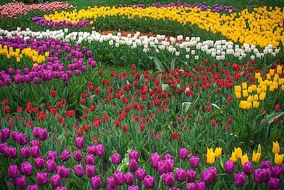 multicolored flower field flora zoom background