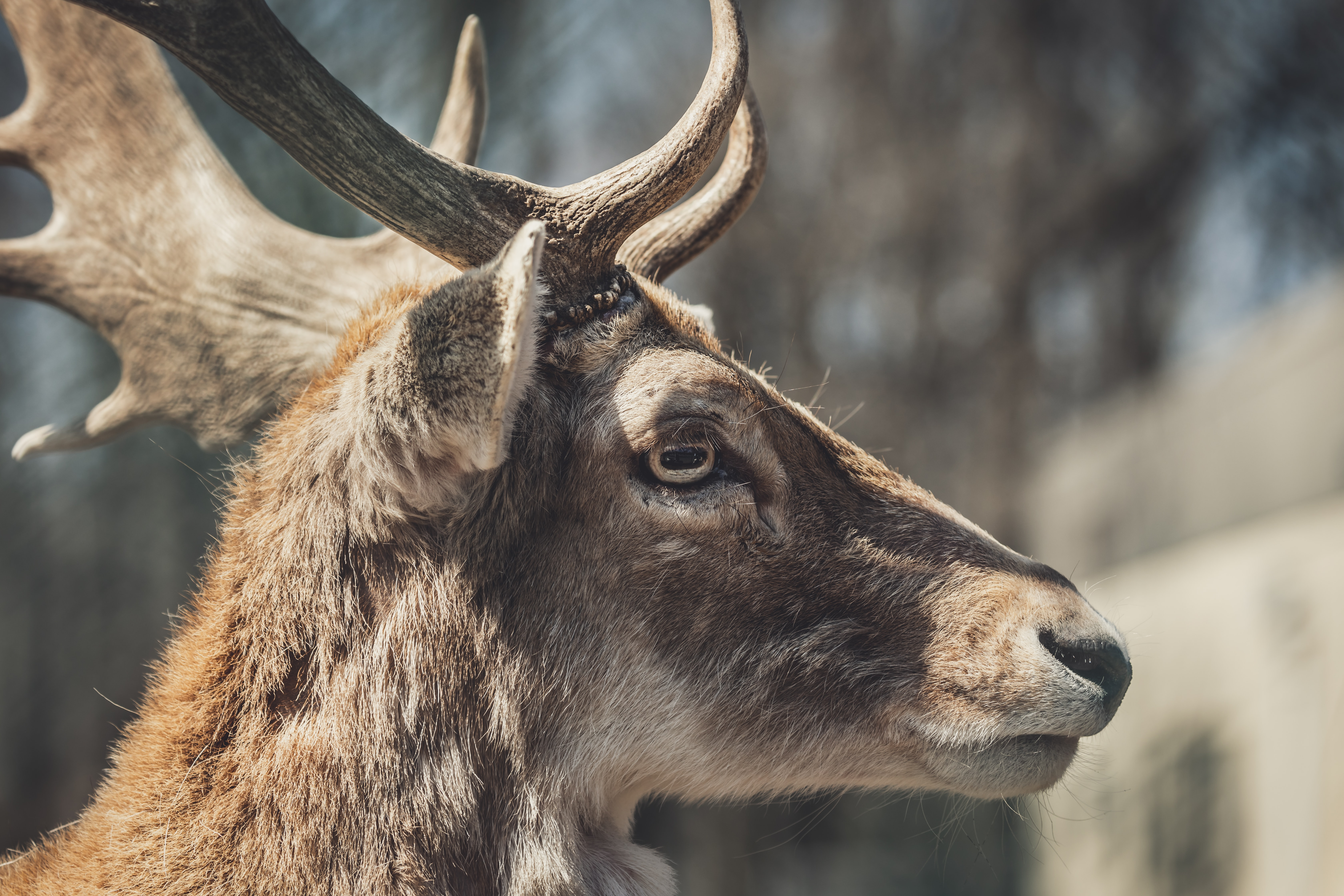 shallow focus photography of brown moose