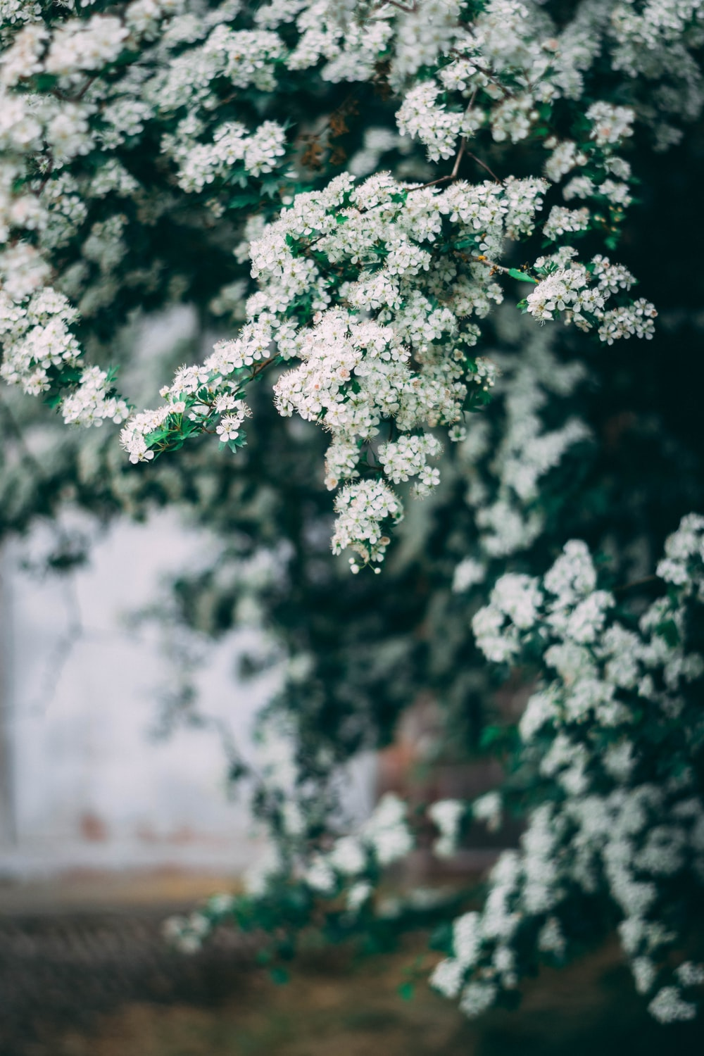 Fragrant Pictures Download Free Images On Unsplash