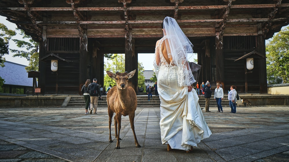 woman in wedding dress standing beside deer