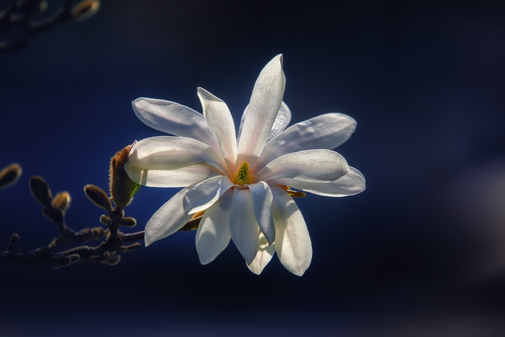 closeup photo of white cluster petaled flower