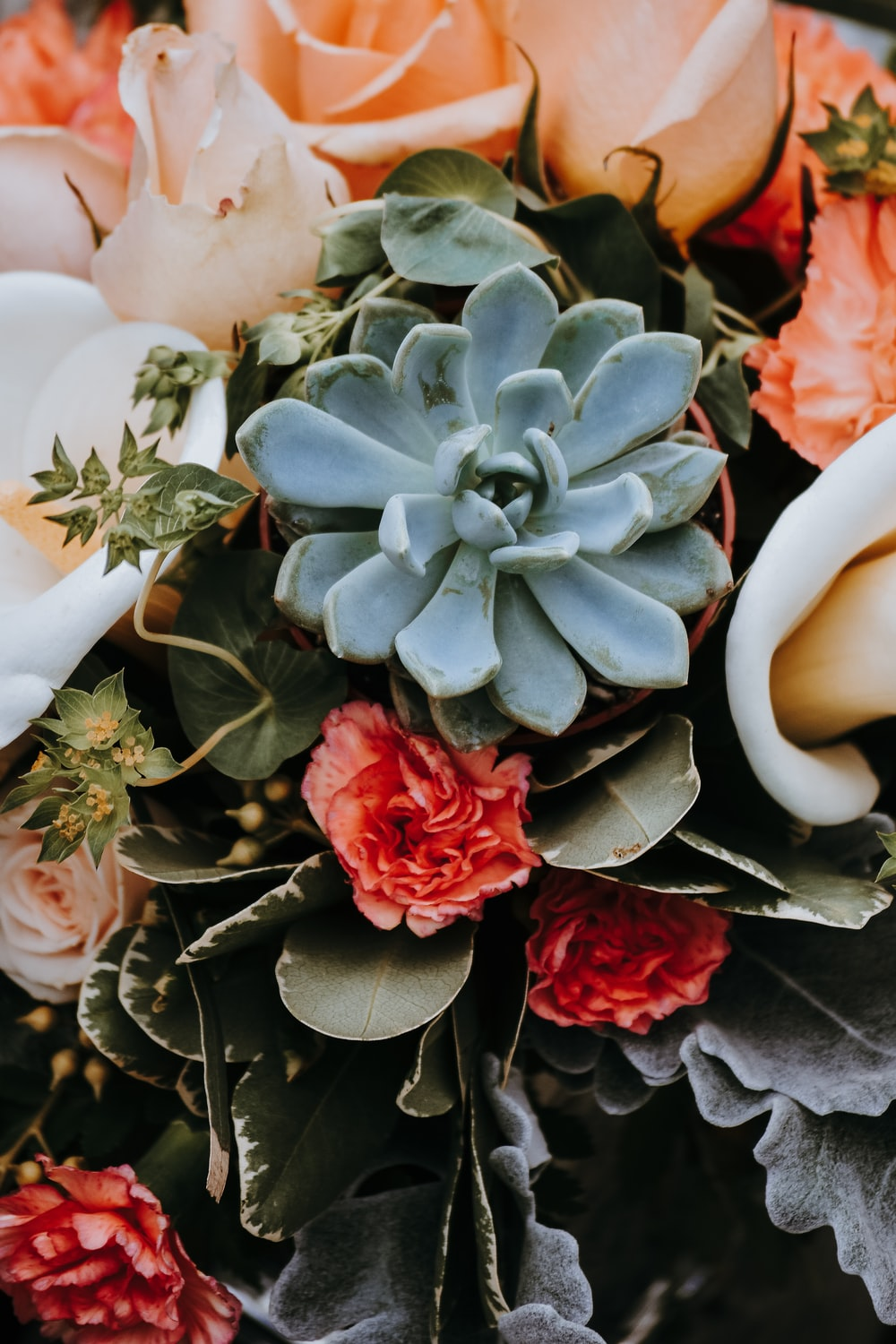 Plant Flower Leaves And Petal Hd Photo By Jacalyn Beales