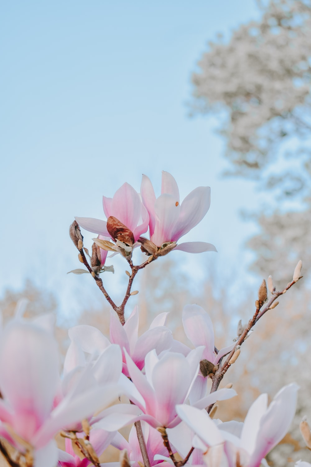shallow focus photography of pink flowers