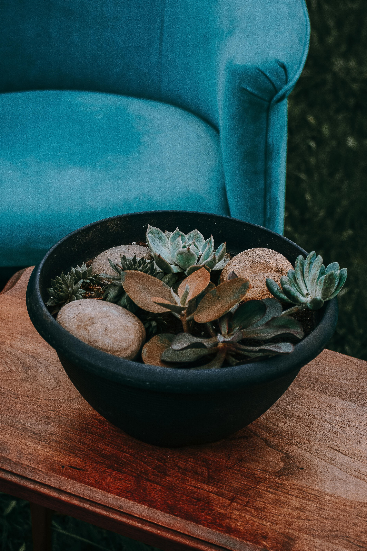 succulent plant on teal pot