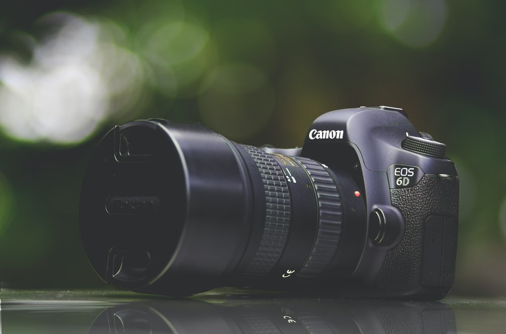 selective focus photography of purple Canon EOS 6D