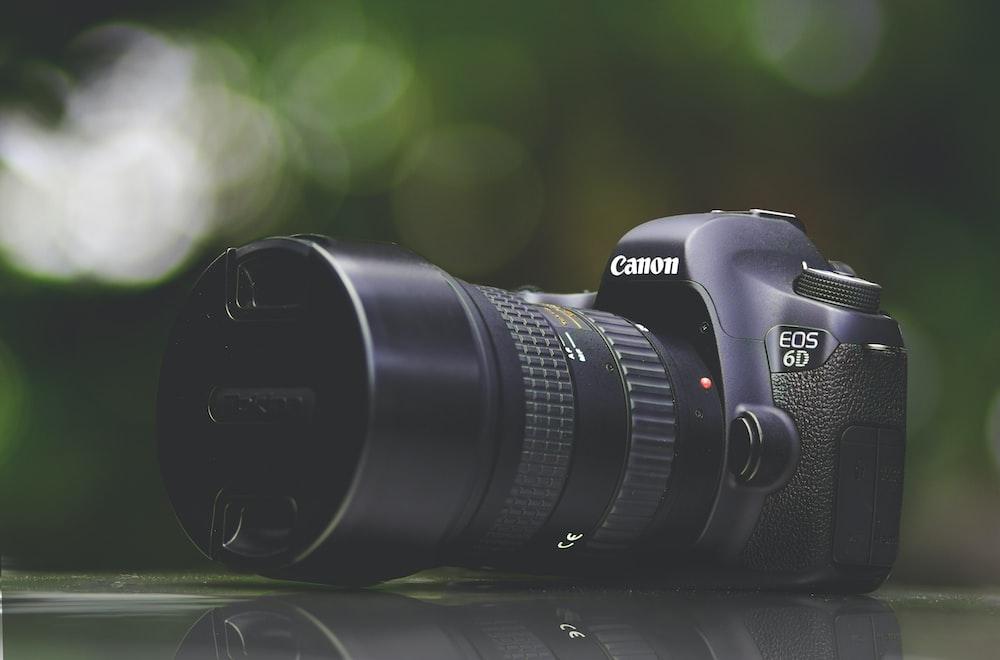 selective focus photography of purple Canon EOS 6D