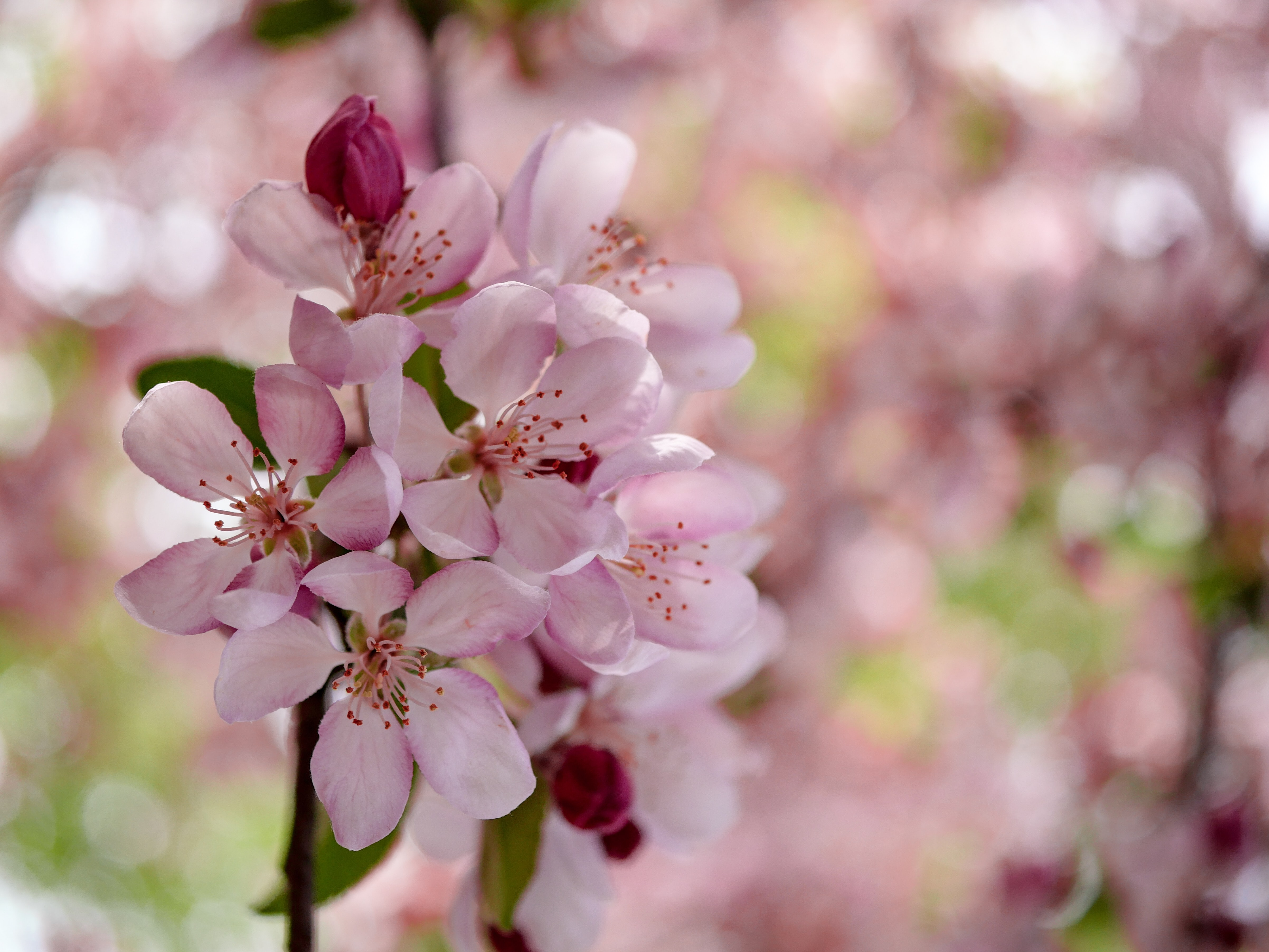 selective focus photo of pink petaled flower