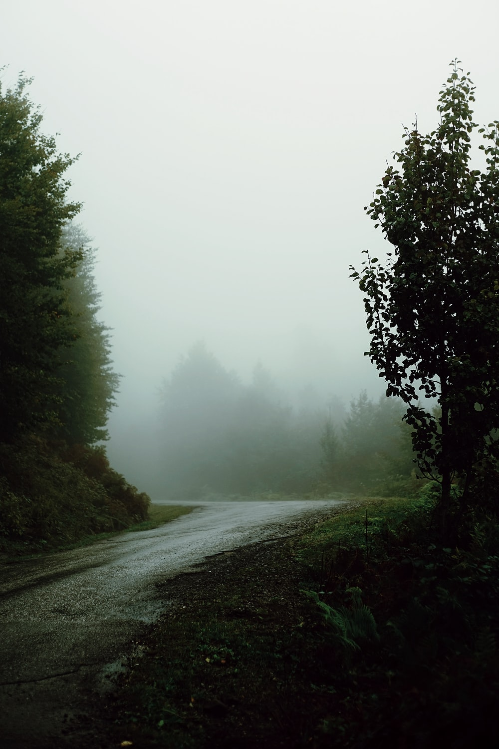 foggy street with trees on sides