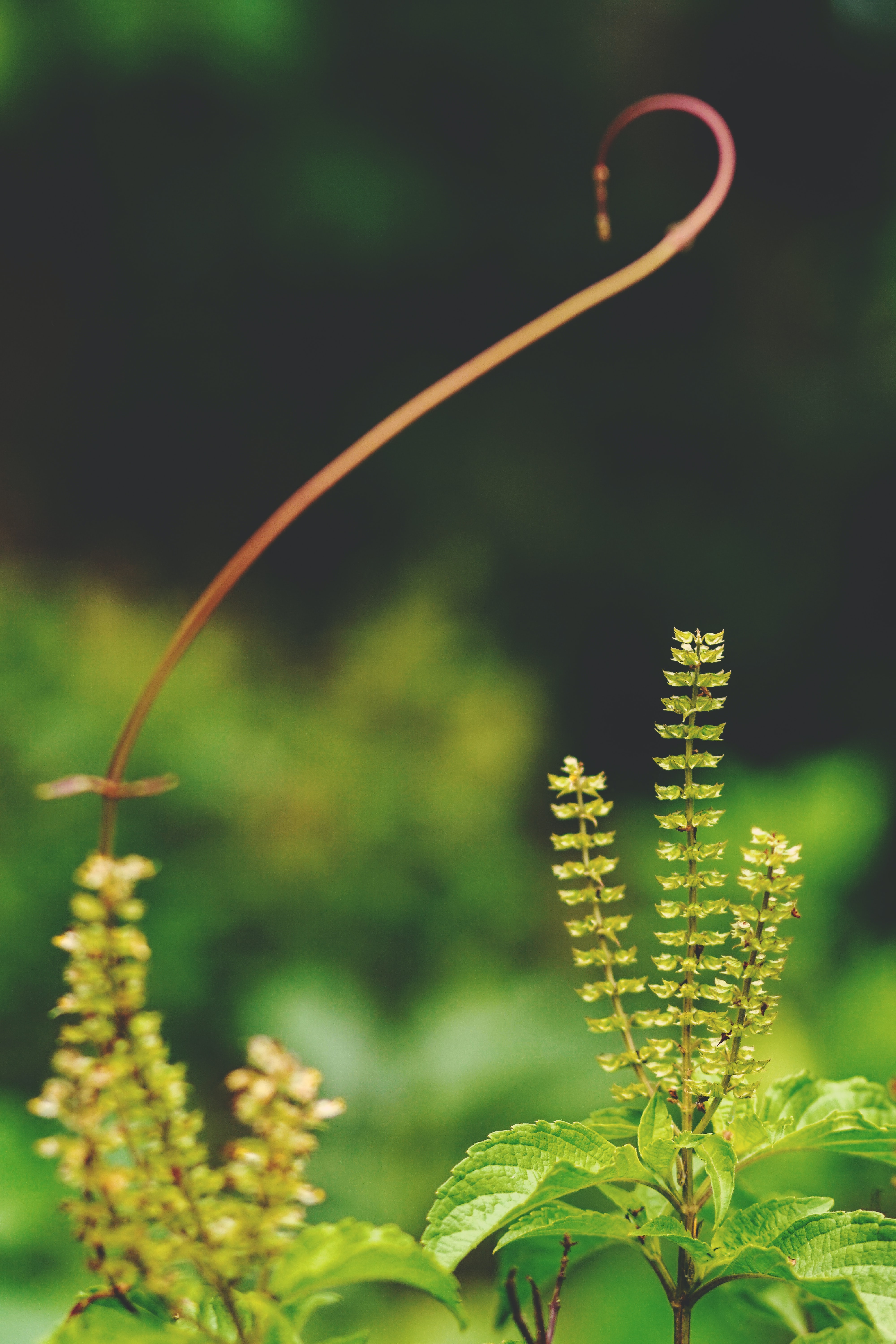 green leafed plants in shallow focus photography
