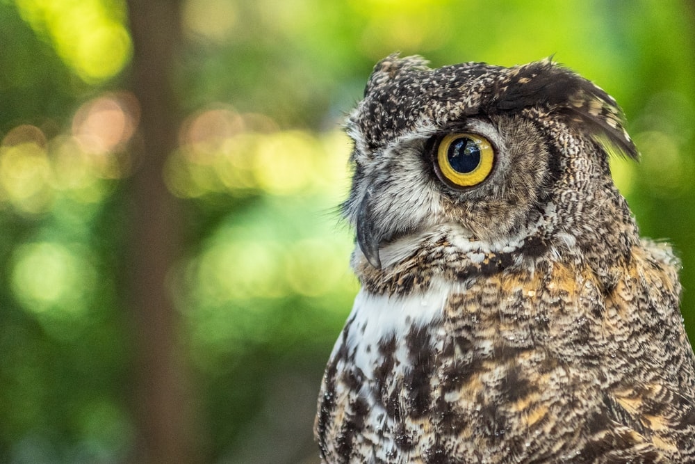 selective focus photography of gray owl during daytime