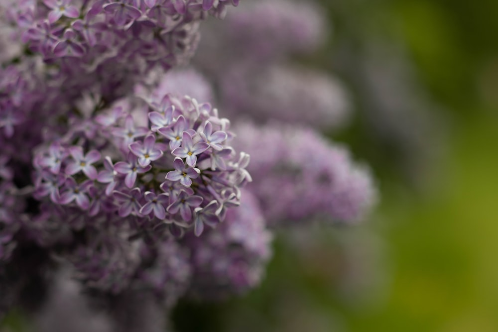 selective focus photo of purple cluster flower