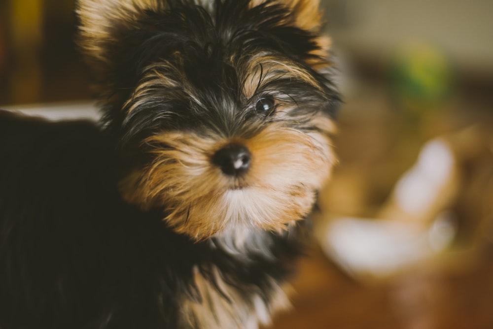 selective photo of medium-coated black and tan dog