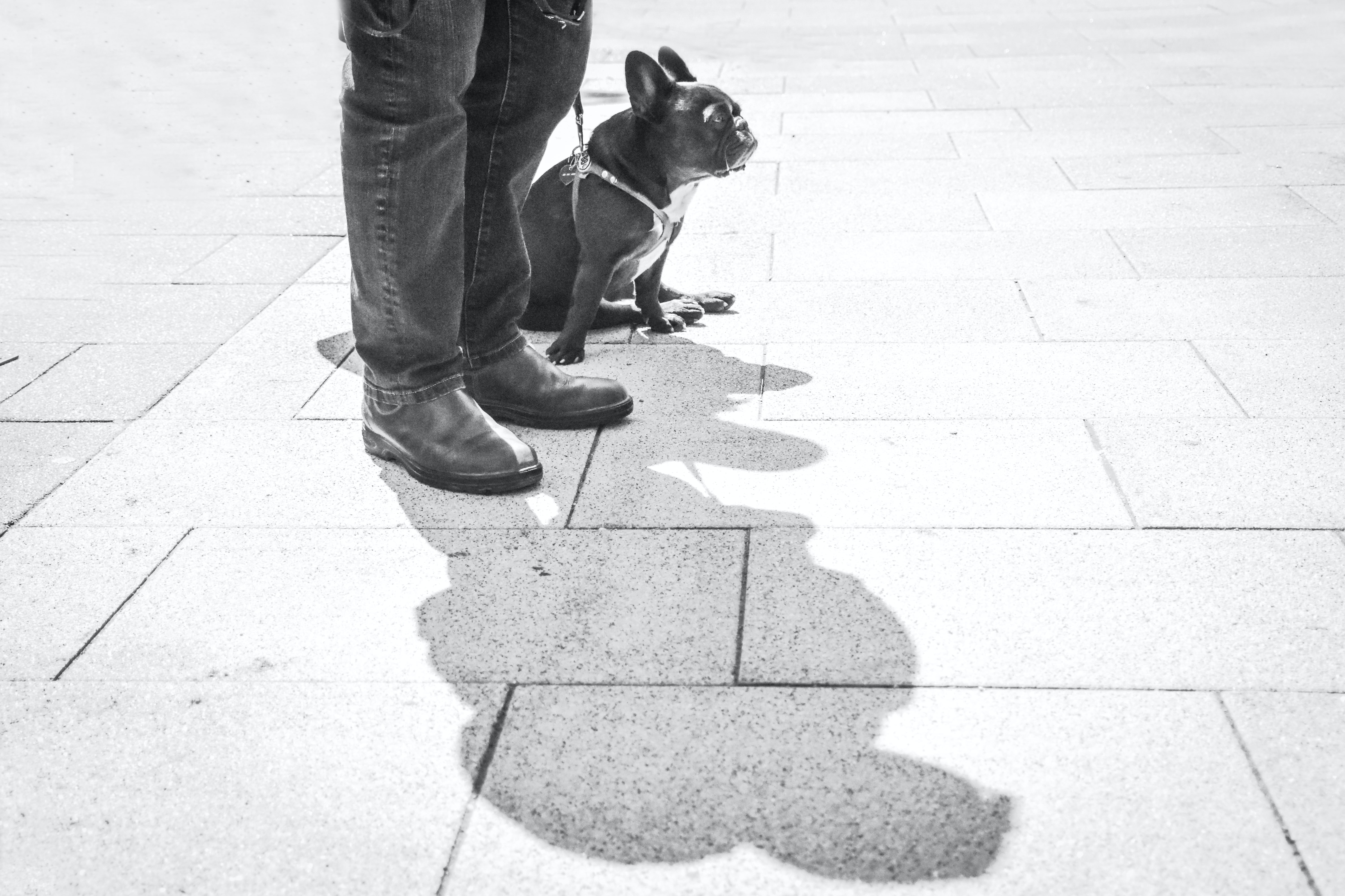person standing outside beside short-coated black dog