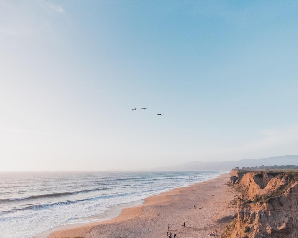 people in beach shore