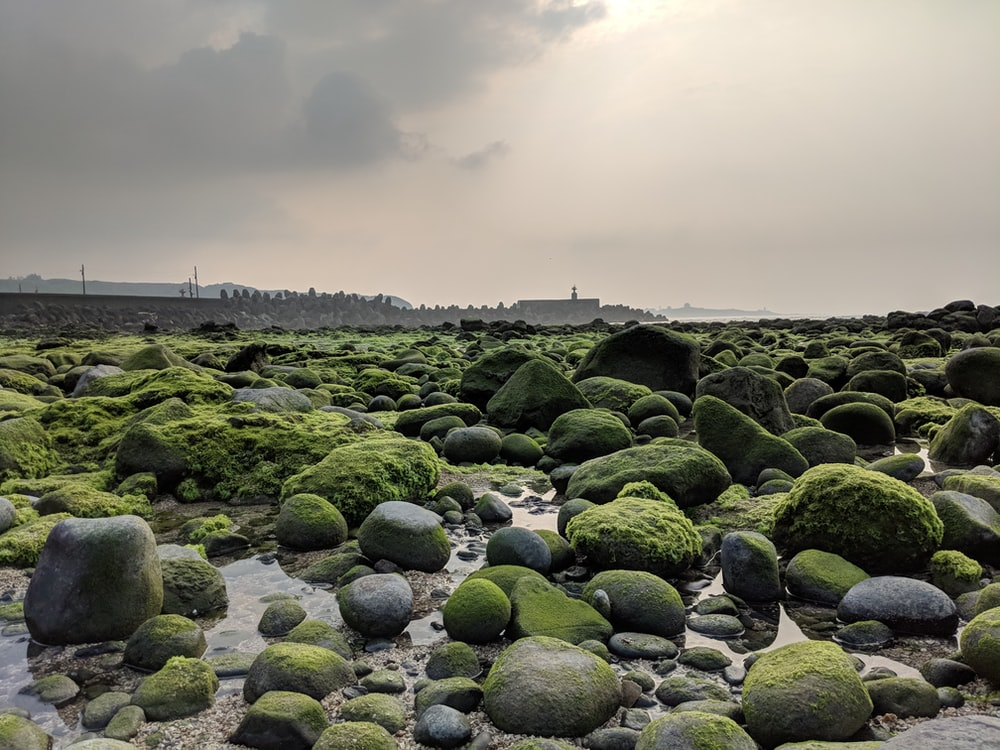 gray stones covered with green plants