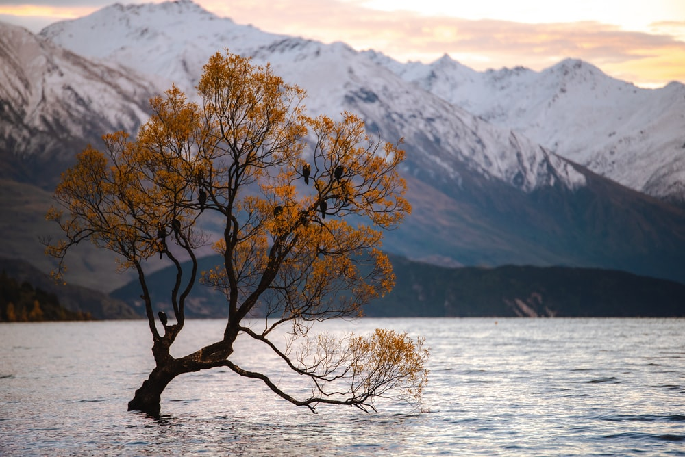 yellow leaf tree in body of water with mountain view during daytime