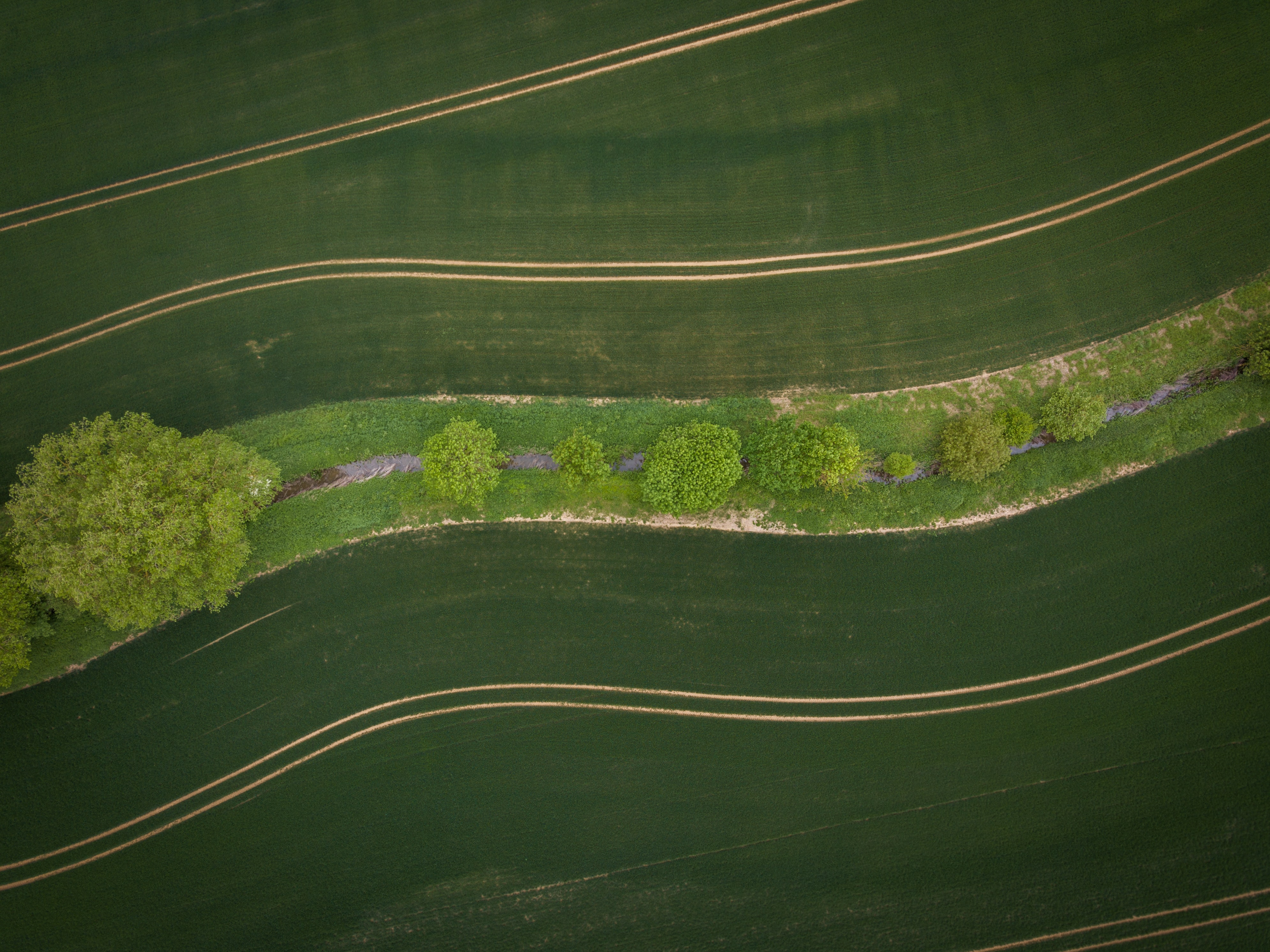 aerial view photo of trees