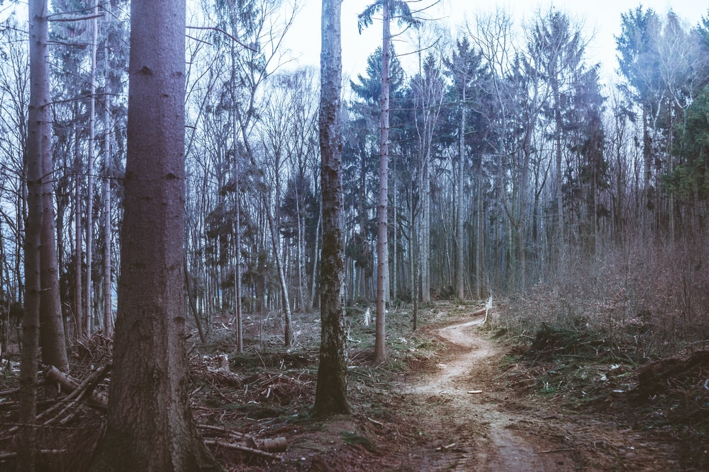dirt road between woods during daytime