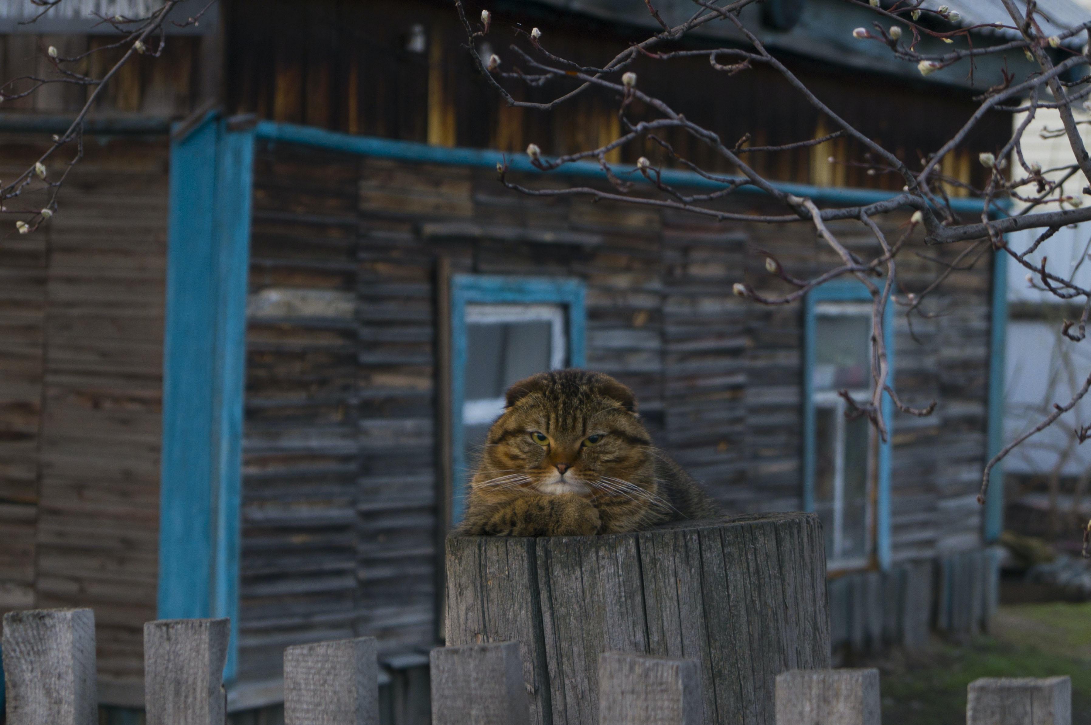 beige tabby cat on top of gray wooden post