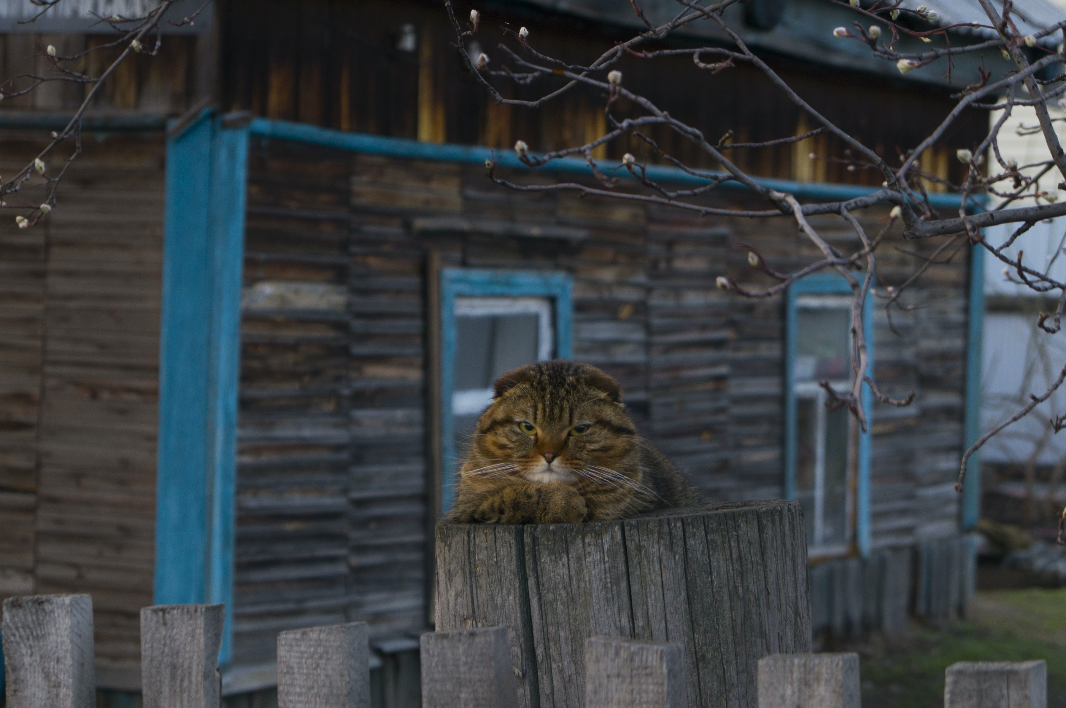 beige tabby cat on top of gray wooden post