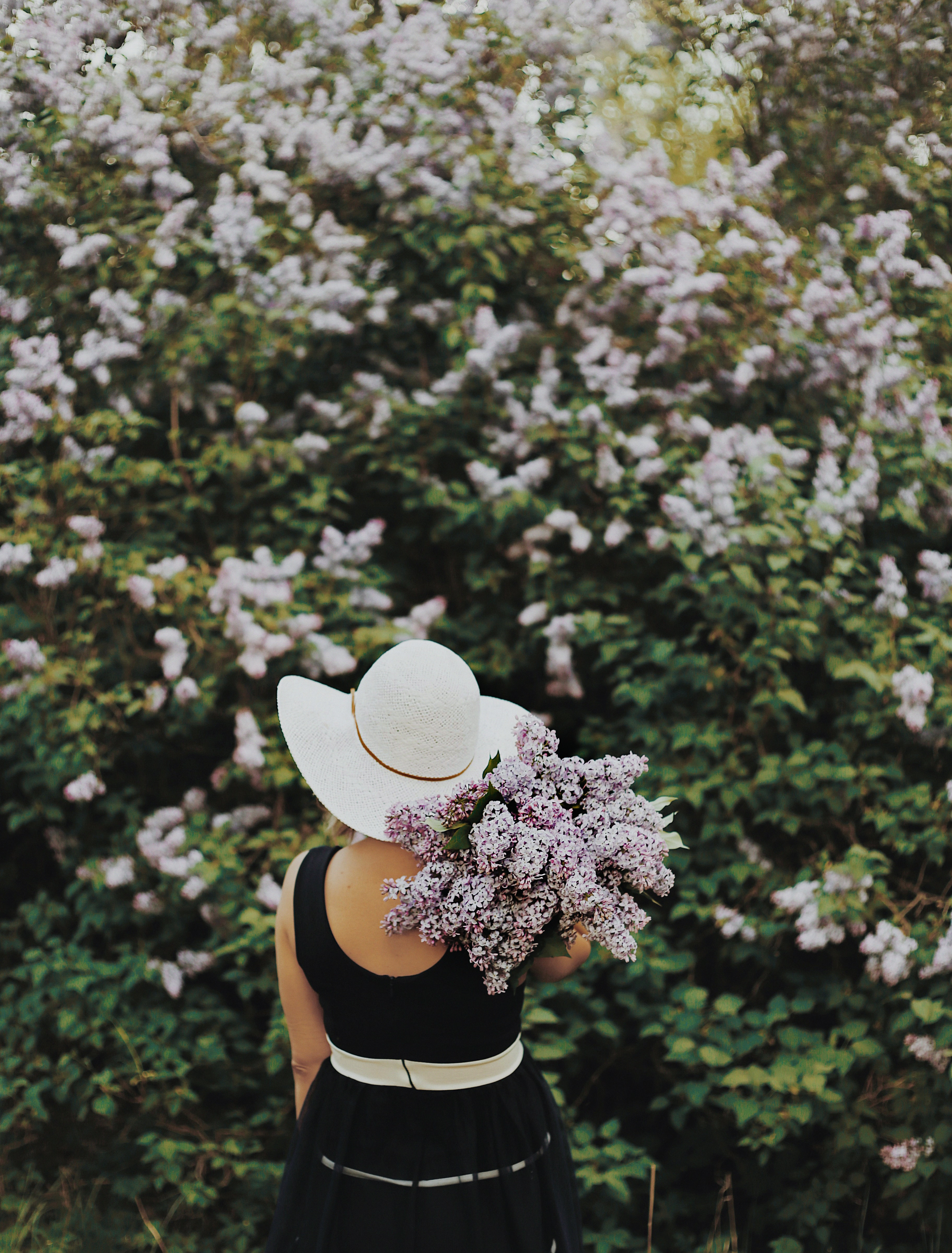 person carrying purple flowers