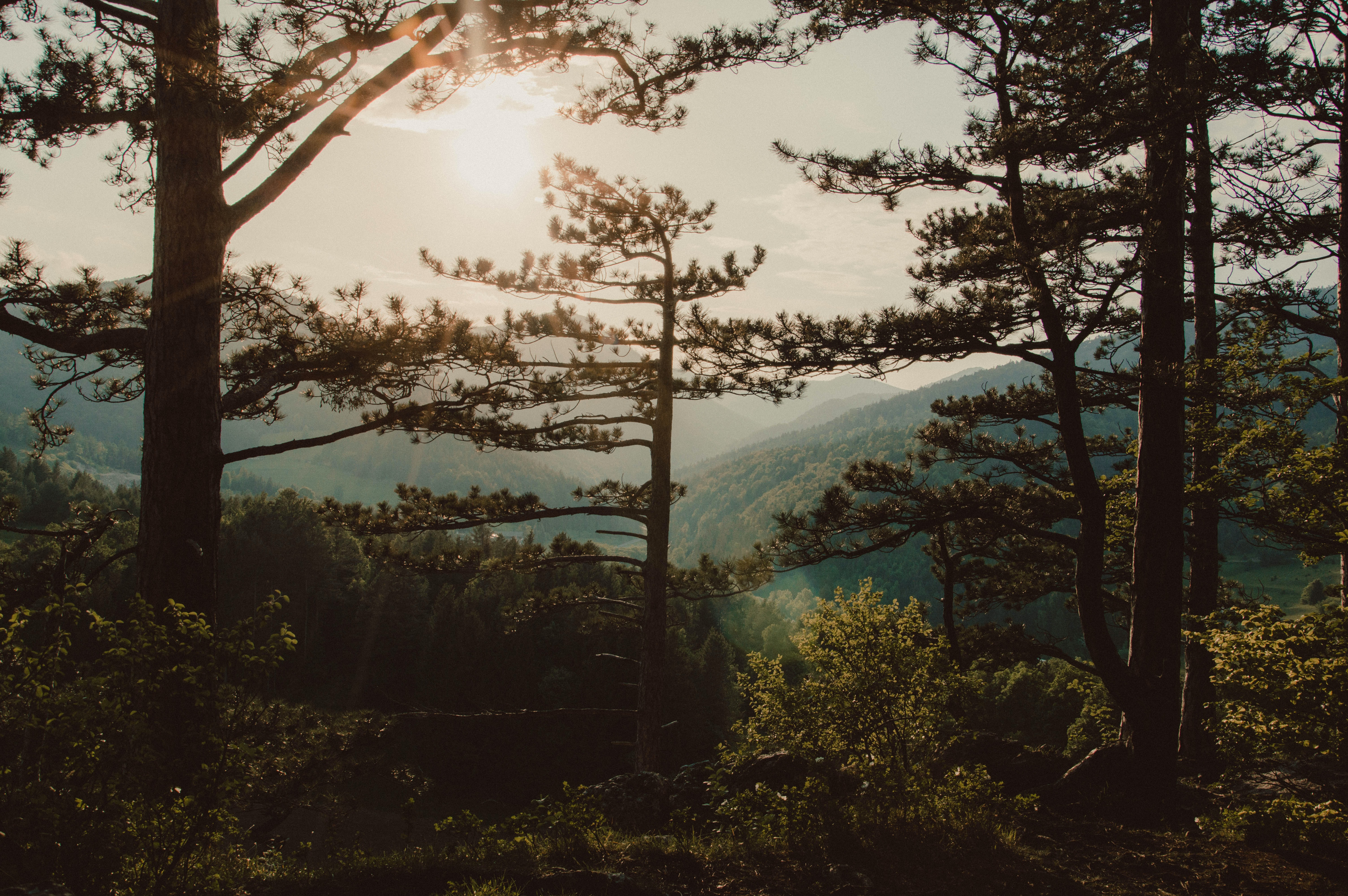 green trees near mountains landscape photography