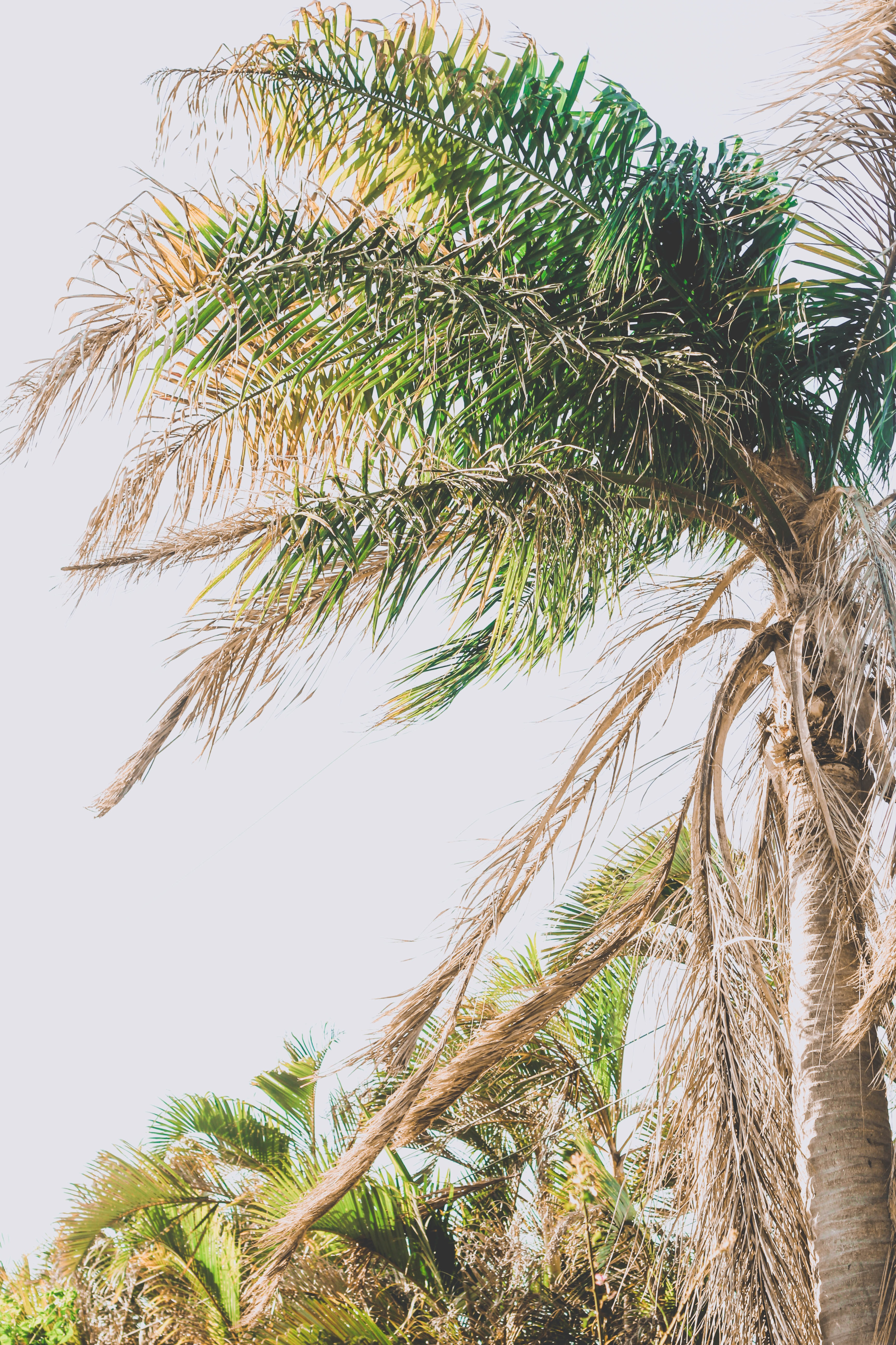 worm's eye view photo of coconut tree outdoors