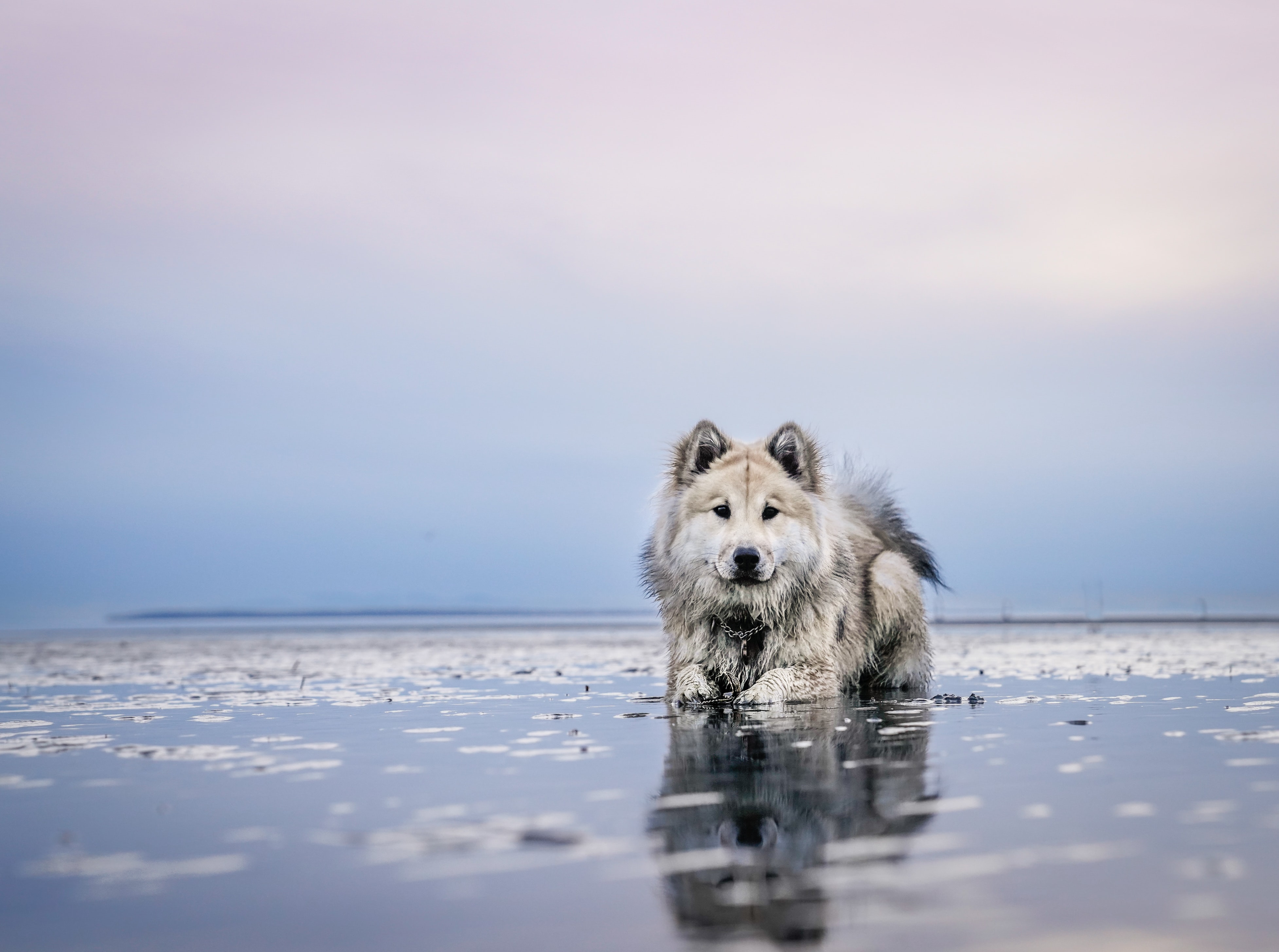 dog on calm body of water