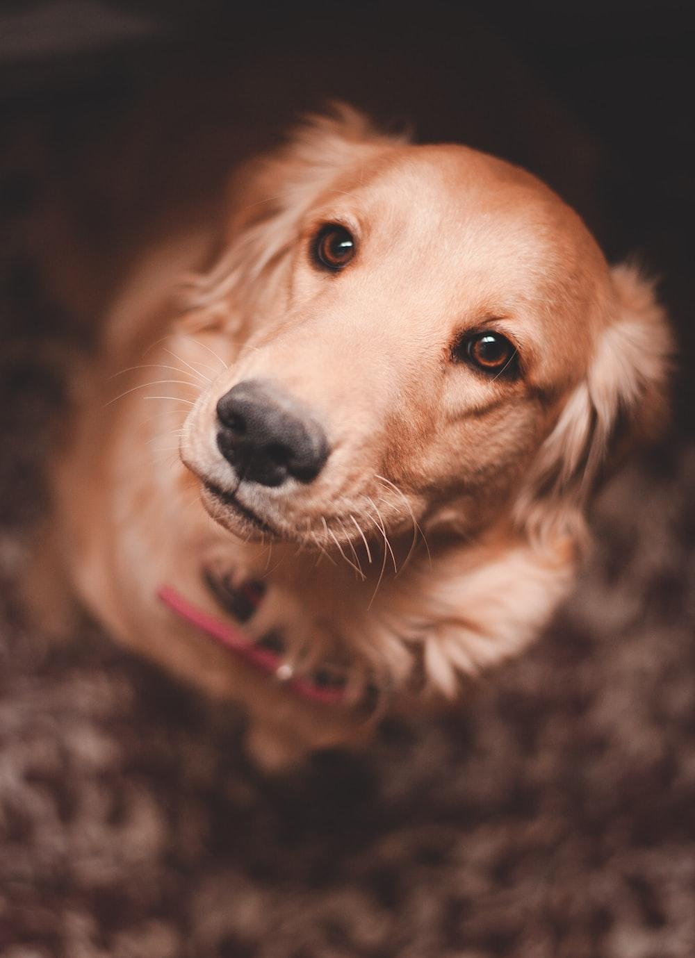 tilt-shift photography of dog