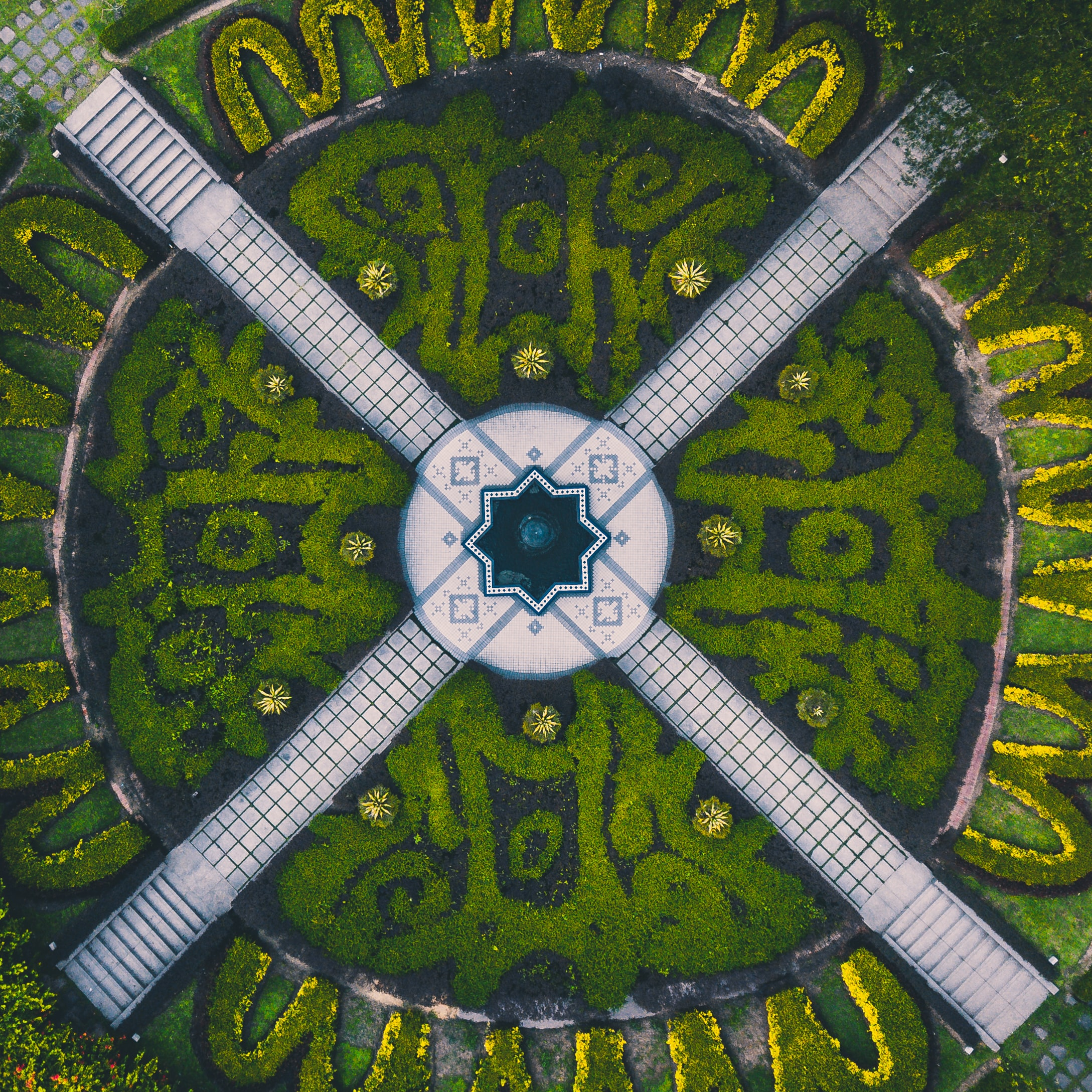 aerial photograph of green plants