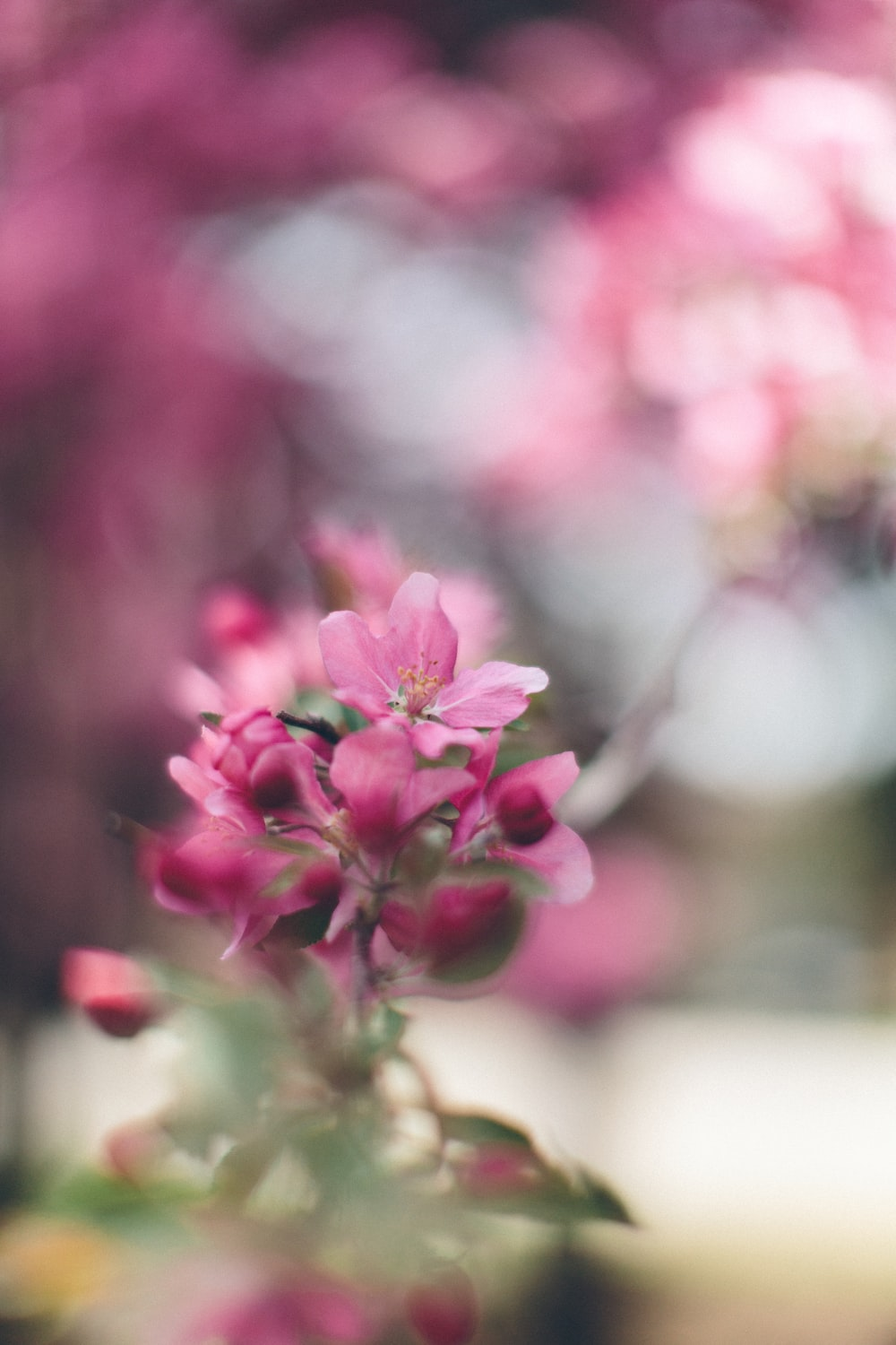 pink petaled flower selective focus photography