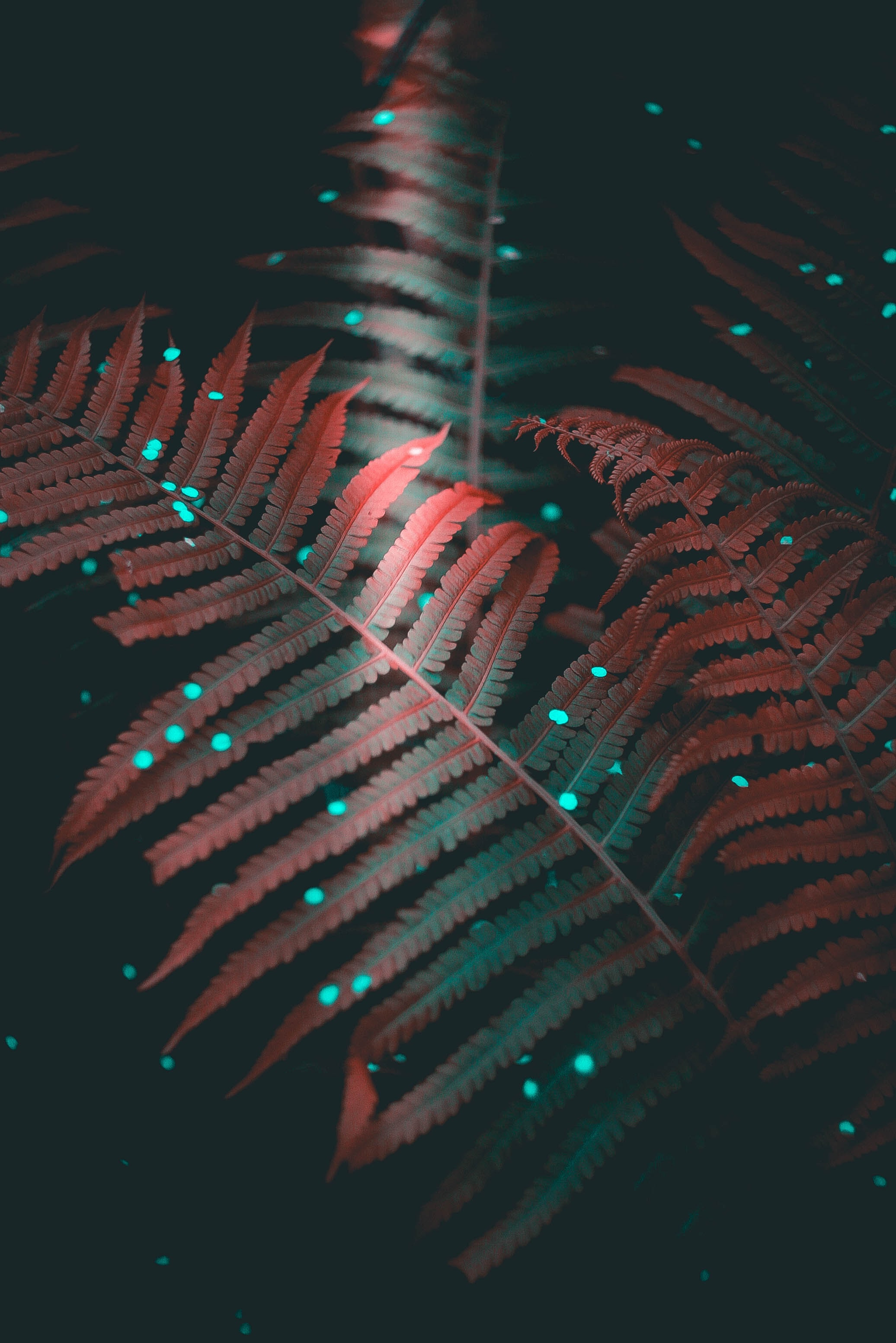 close up photography of green fern plant with red LED light