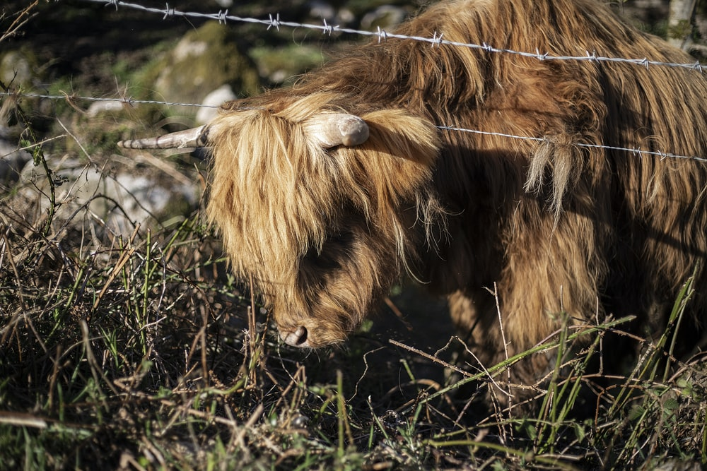 brown and black animal standing on green grass beside gray barbwire at daytime