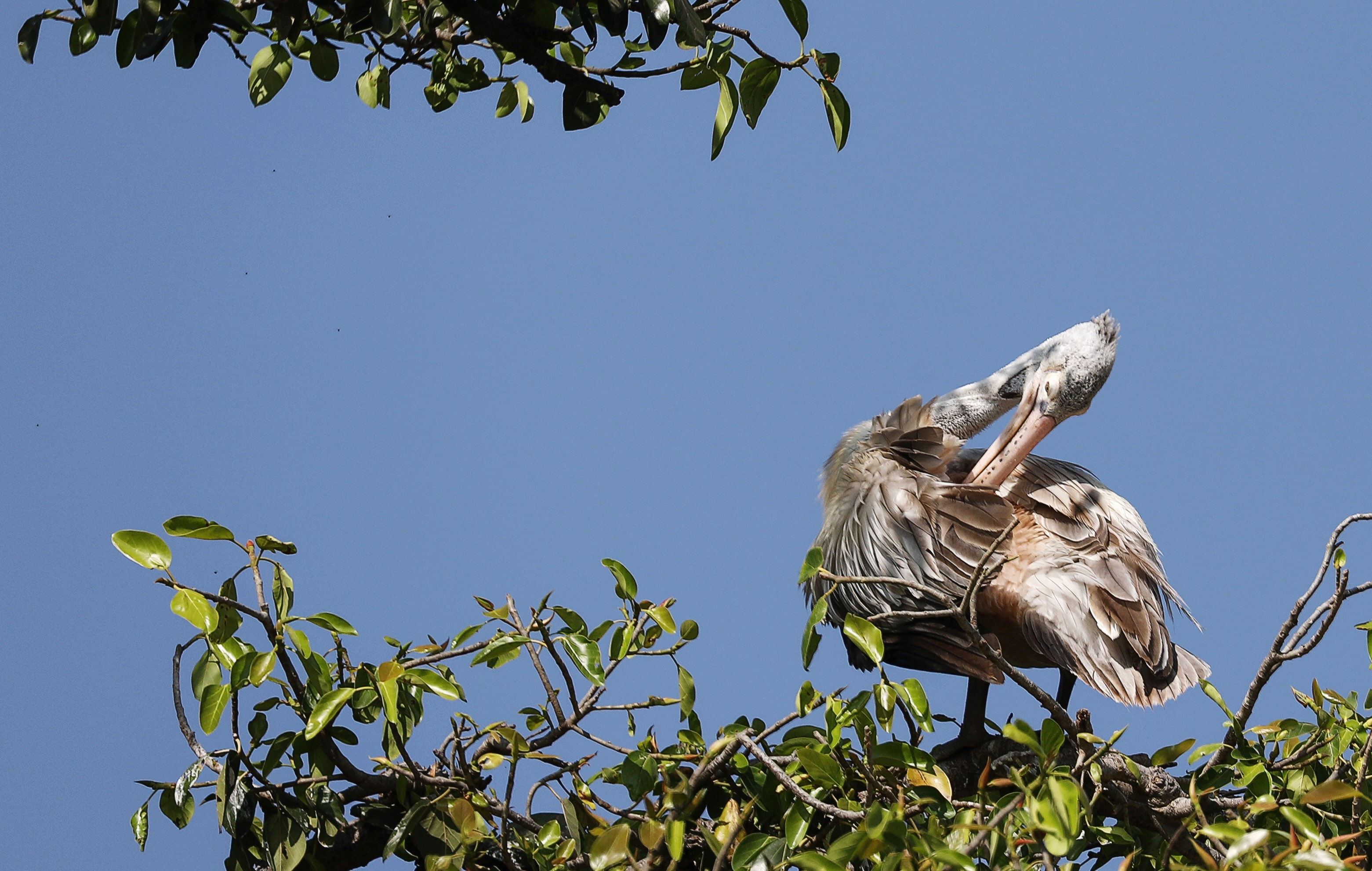 white and brown pelican perched on green tree branched during daytime