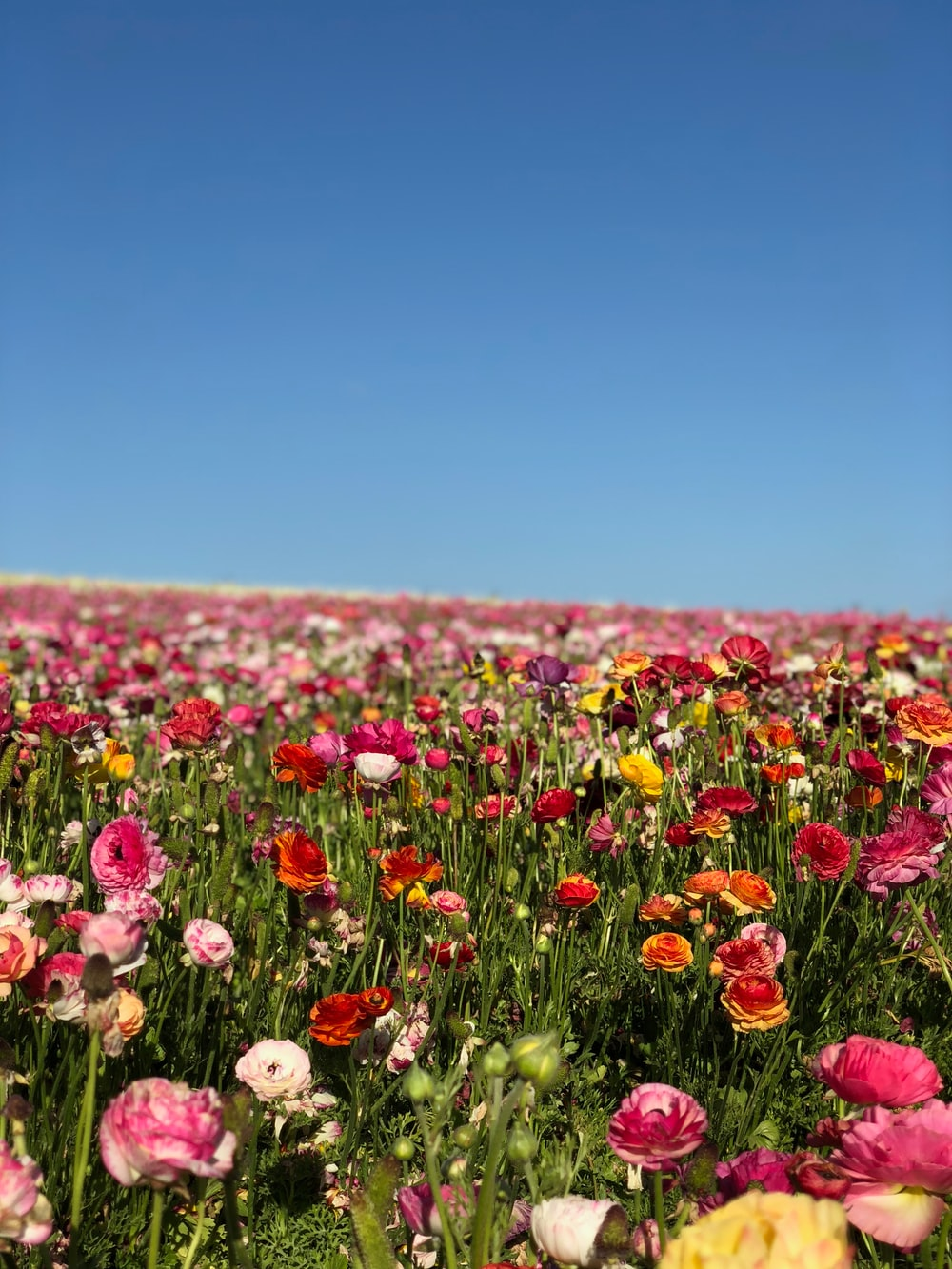 assorted-color flower farm during daytime