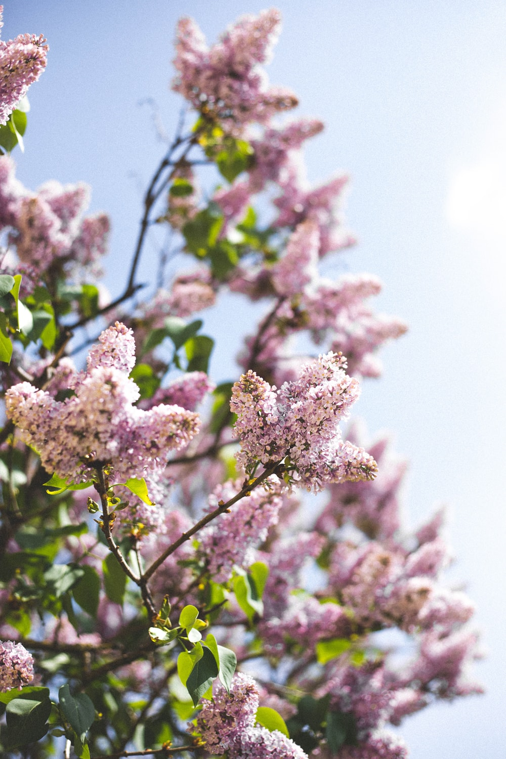 Spring pictures download free images on unsplash selective focus photo of pink petaled flowering plant mightylinksfo