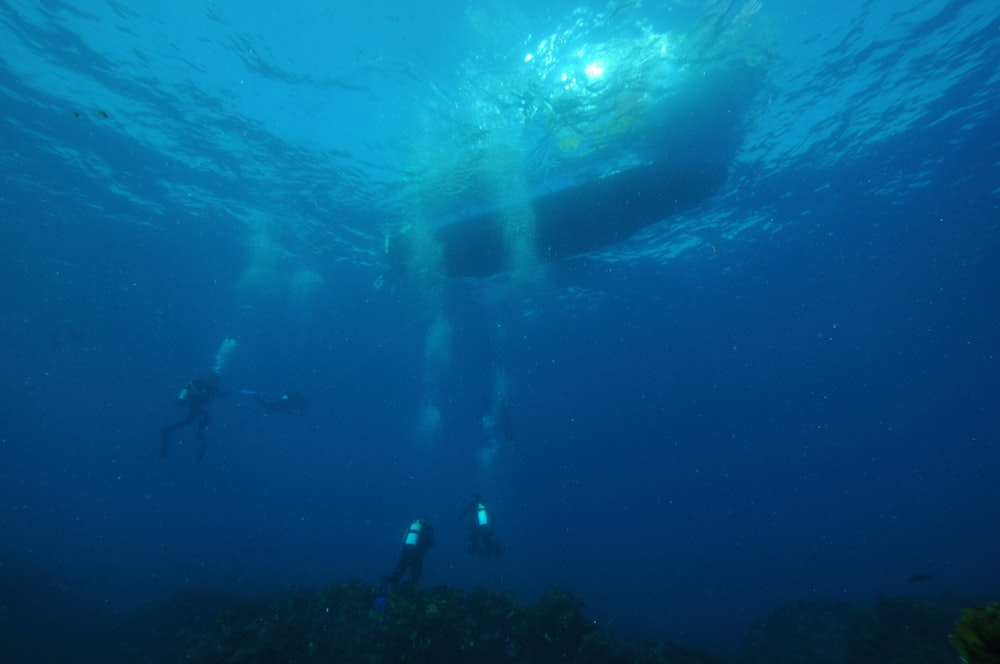 three divers dived on water