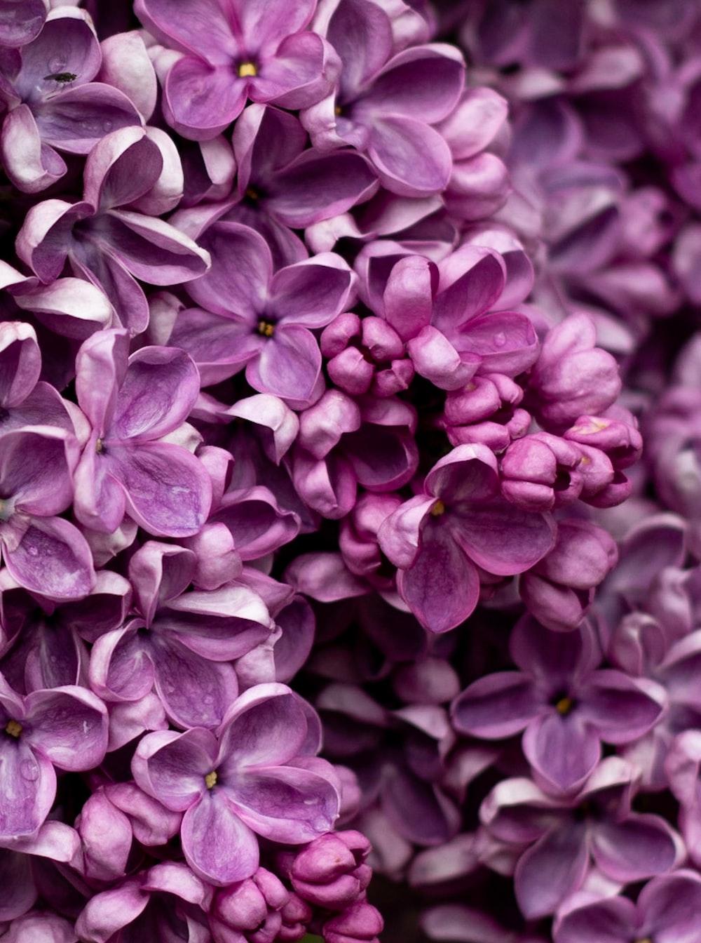 macro photography of purple flower