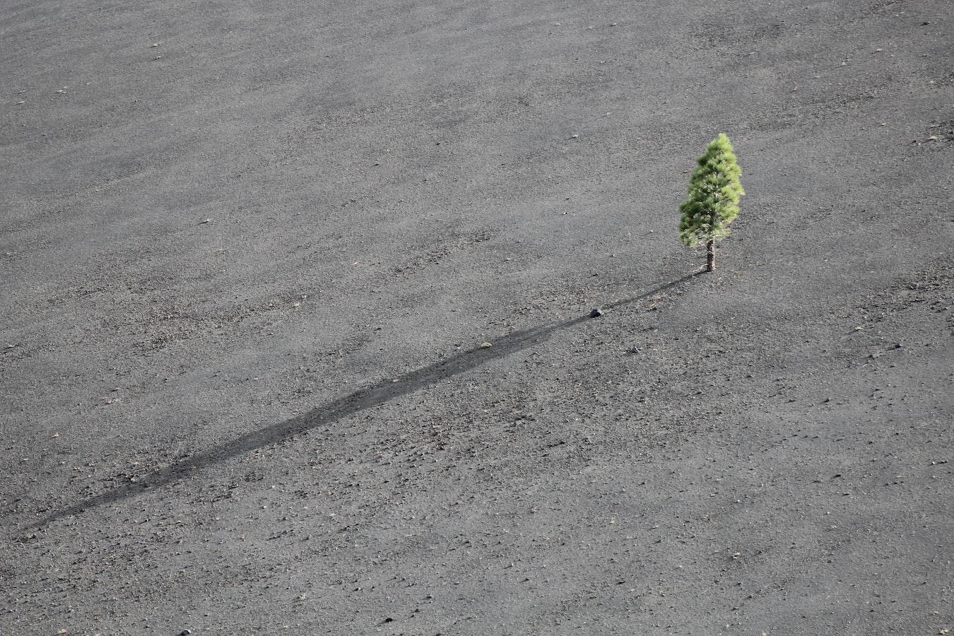 Samotný strom uprostřed pustiny.