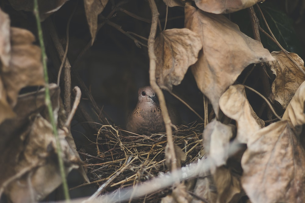 brown bird on nest