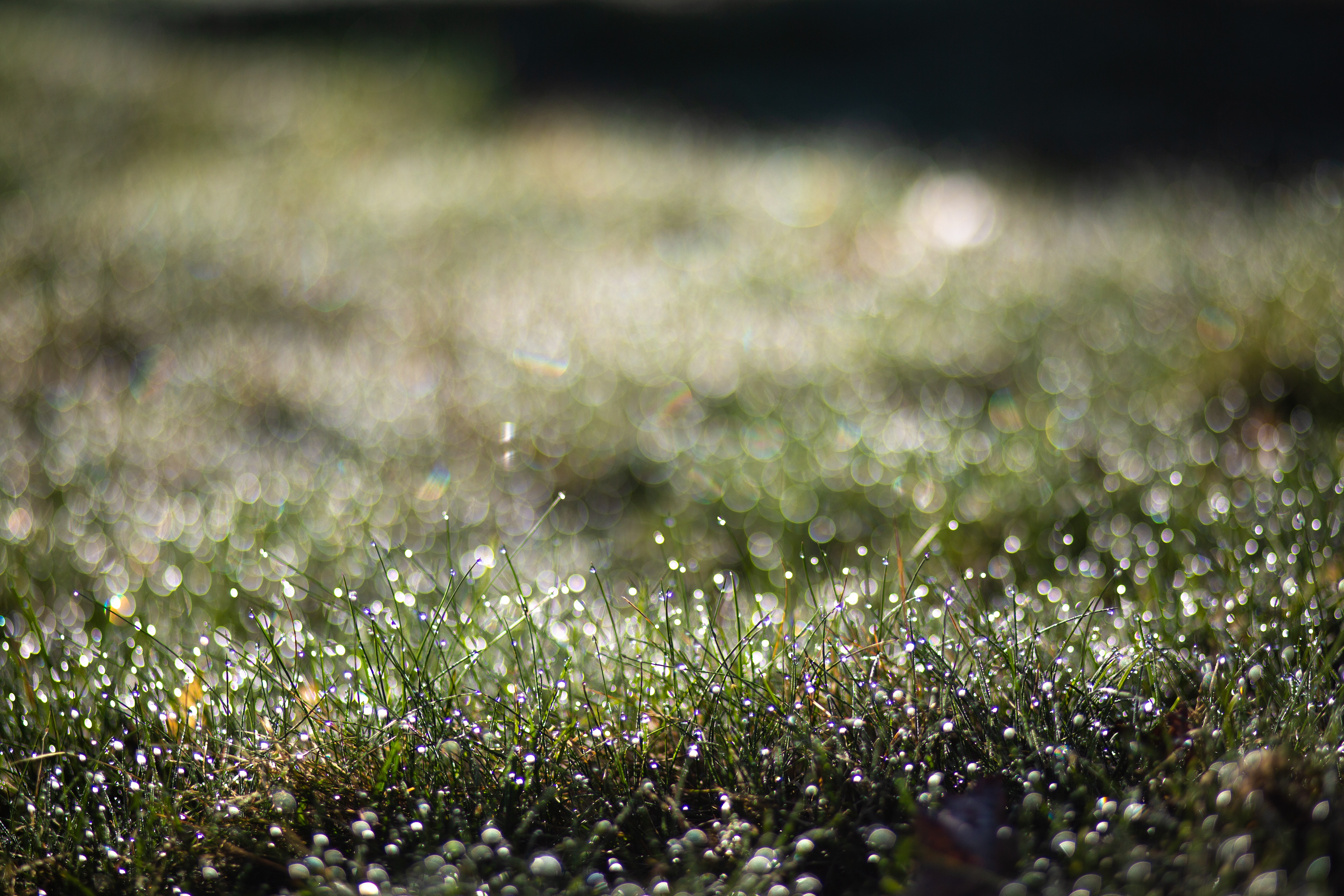 selective focus photography of green grass plant