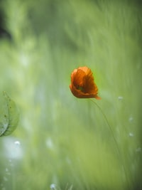orange flower surrounded by grass during daytime
