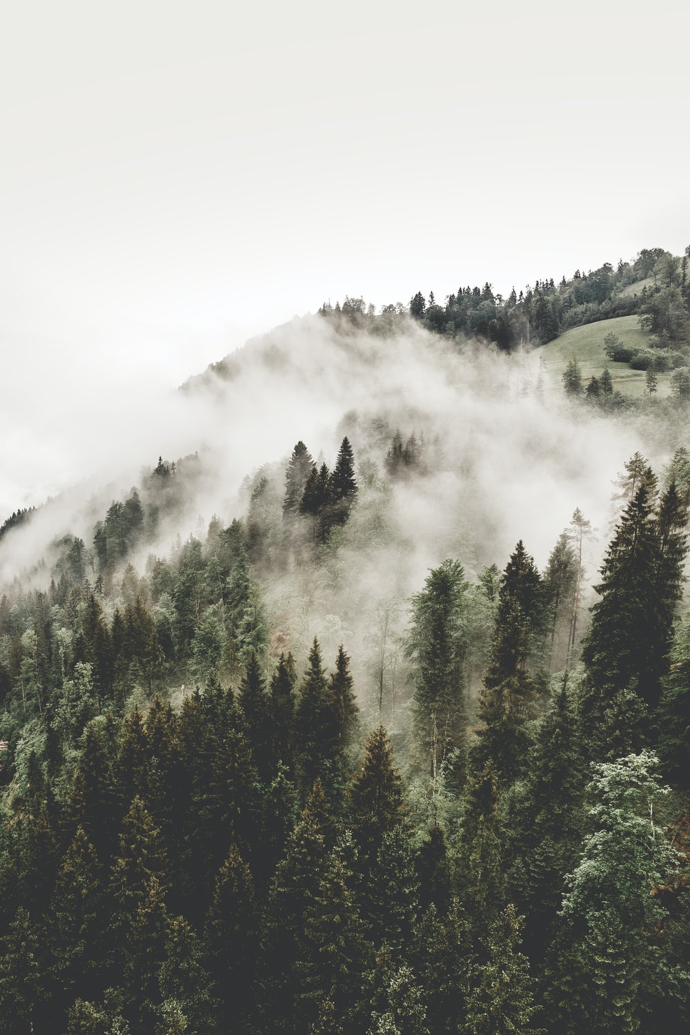 aerial photography of woods with fogs