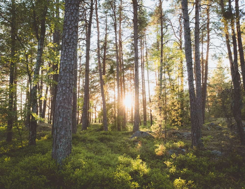 photo of trees on forest