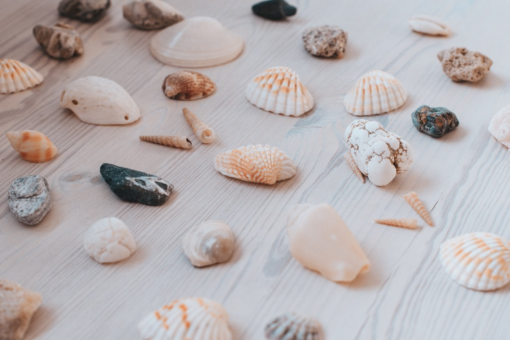 assorted seashell lot