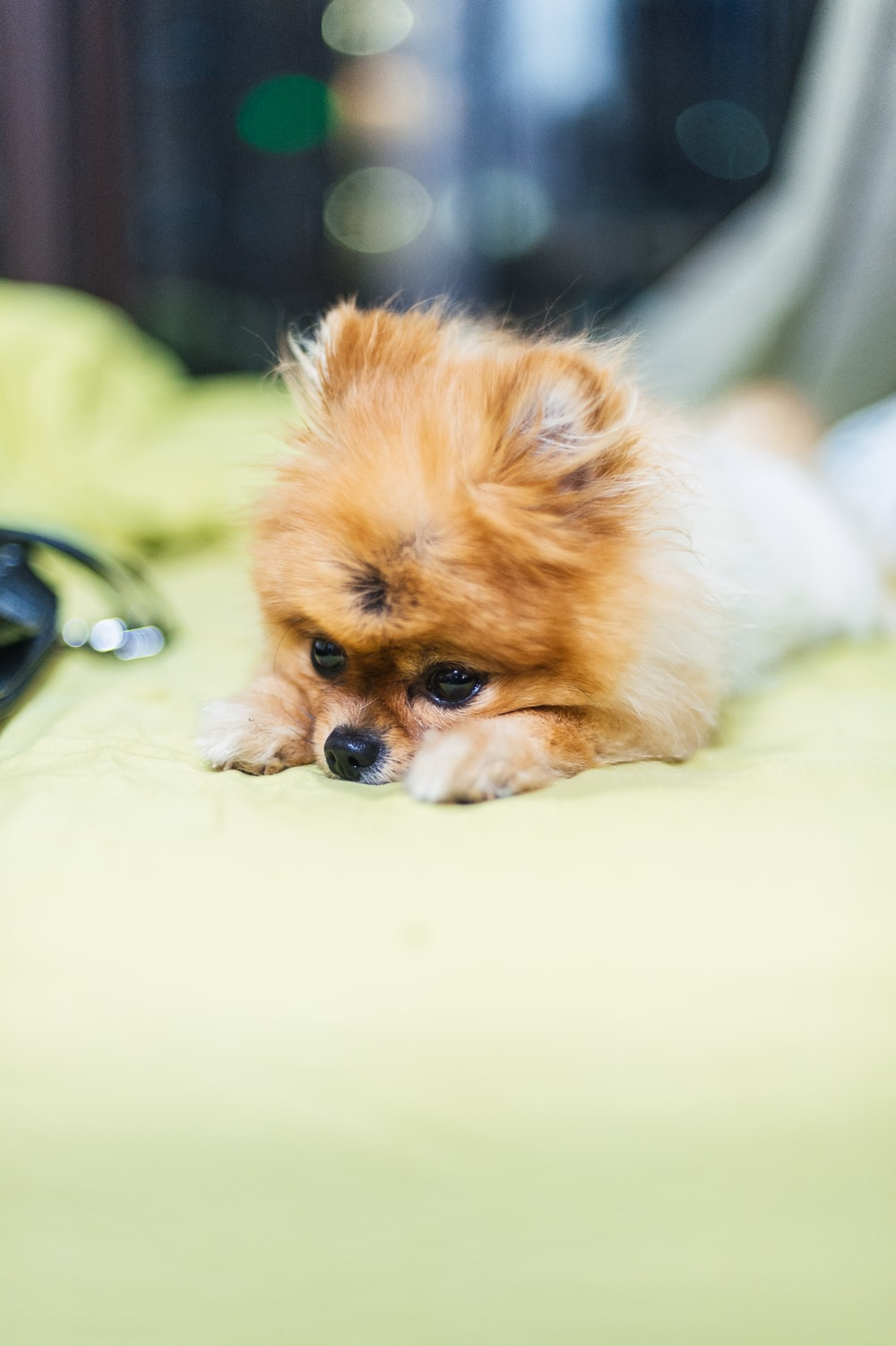 brown puppy on green textile