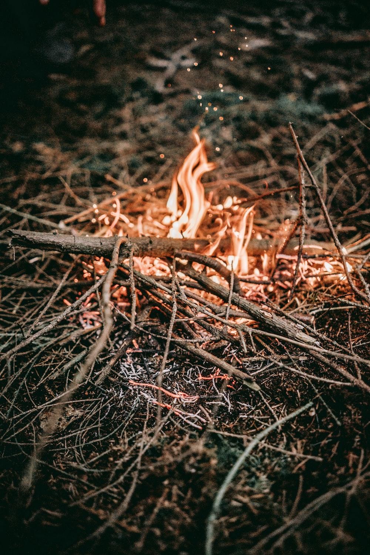 burning twigs photo