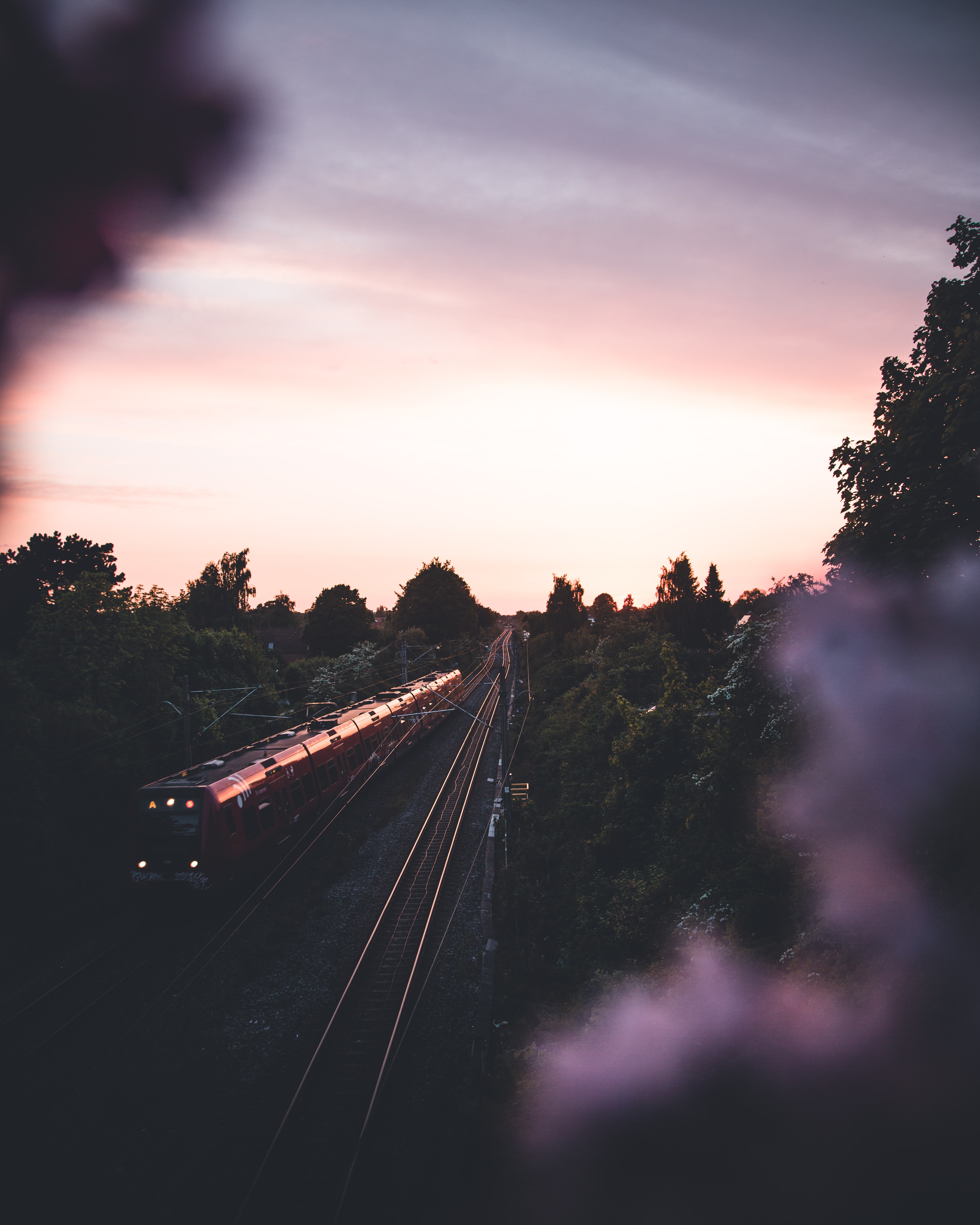 red train between green trees at golden hour