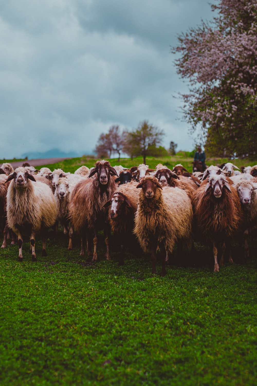 500 Farm Animal Pictures Download Free Images On Unsplash